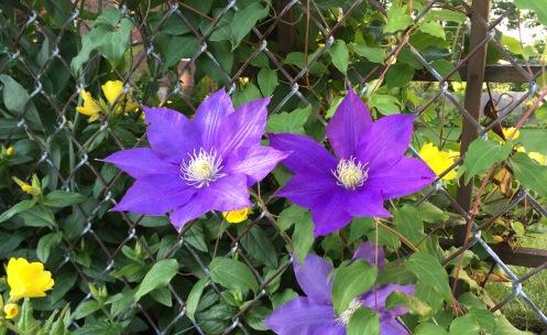 FlowersFence