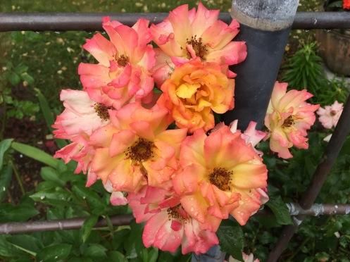 FlowersShower