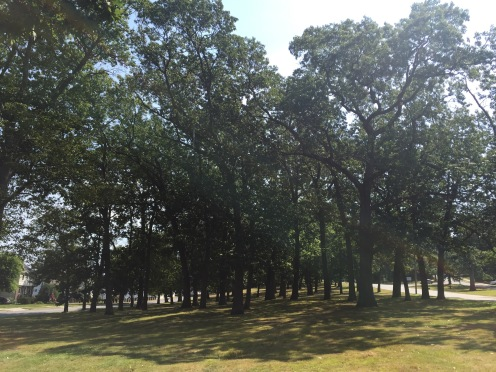 TreeGroveParkway