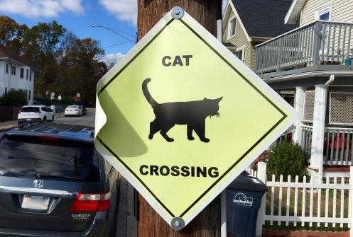 CatCrossing
