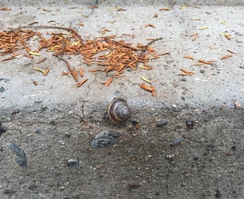 SnailEdge